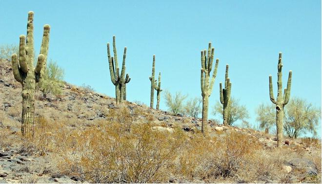 Phoenix Hillside