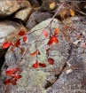Fall Colors, Rock...