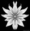 Spiritual Flower