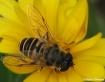 Bee....