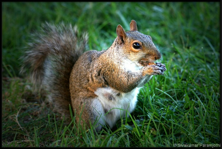 Hungry squirrel!