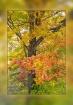 Fall's Fancy ...