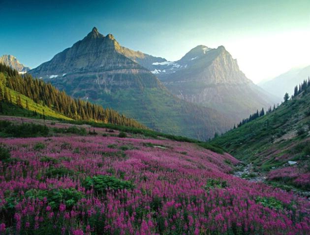 Garden Wall - ID: 4688392 © Eric Reese
