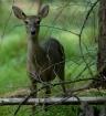 """""""Doe, A Deer,..."""
