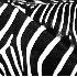 Zebras - ID: 4719882 © Kathleen Roughan