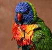 Colorful Attitude...