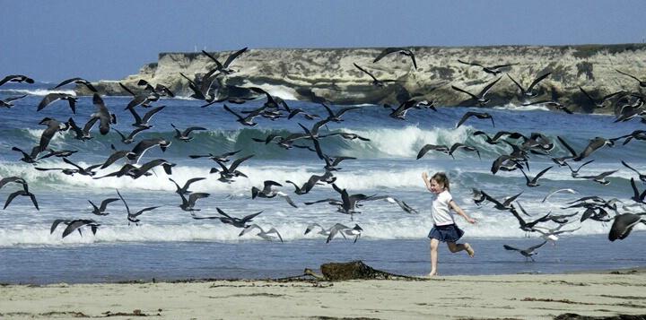 Running with the gulls - ID: 4723624 © Daryl R. Lucarelli