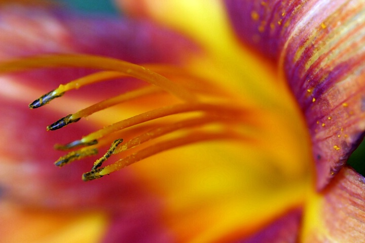 day lilly; upclose and personal