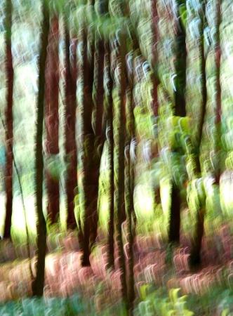 Blur In Spring Woods