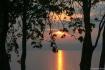 Sunset Through Tr...