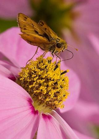 Mmm ... Pollen