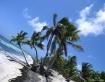 Tilted Palms