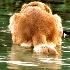 2The Water Dog - ID: 4747423 © Lynn Andrews