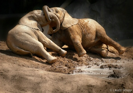 Young Mud Wrestlers
