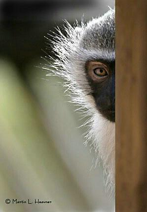 Nibela Felon, Nibela Peninsula, South Africa - ID: 4766510 © Martin L. Heavner