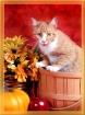 Fall Kitty :)