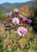 Flowers and Folia...