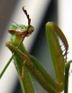 Cleaning Mantis..