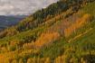 Autumn Aspen San ...