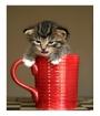 cup o' kitten