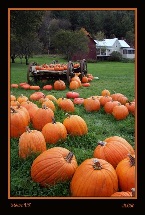 The Pumpkin Trail..