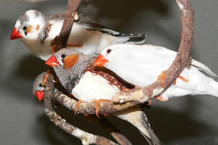 Birds Eye Veiw