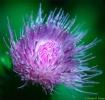 flower-portrait01