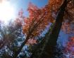 Midday October