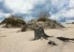 Stumpy Beach