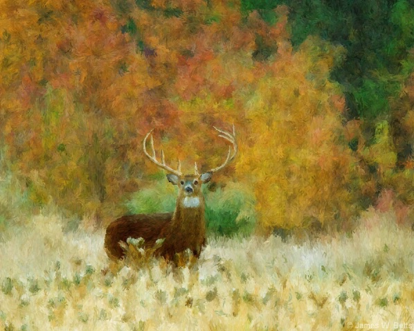 Fall Buck - ID: 4890427 © James W. Betts
