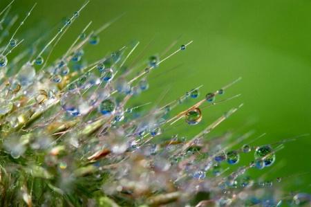 Glistening Dew Drops
