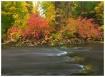 Creek Near Trout ...