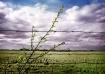 Tipton Farmland