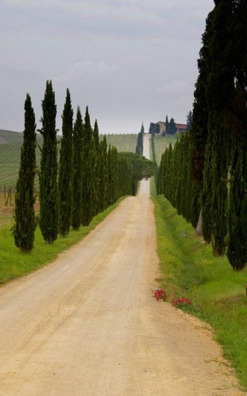 Tuscan Breeze