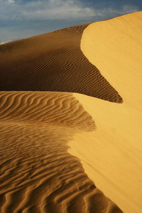 Morning Dunes - ID: 4911973 © Leslie McLain