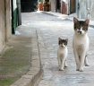 Just 2 Cats in Sp...