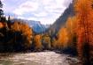 Colorado Gold MT