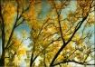 Autumn Expression...