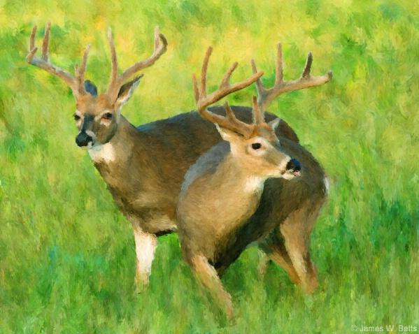 Bucks - ID: 4917412 © James W. Betts
