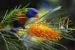 Natures Gifts Abo...