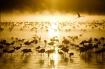 Flamingos at sunr...