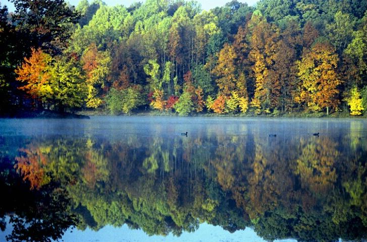 Needwood Autumn Morn