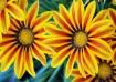 flowers :)-