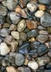 Shiny Stones