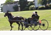 Amish  Kindred S...