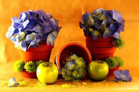 Green Apples & Hydrangea