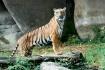 Cincinnati Zoo-Po...