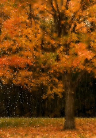 Rainy Autumn Day