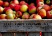 Lull Farm Apples