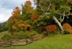 Autumn's Colo...